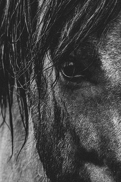 Equine Strides