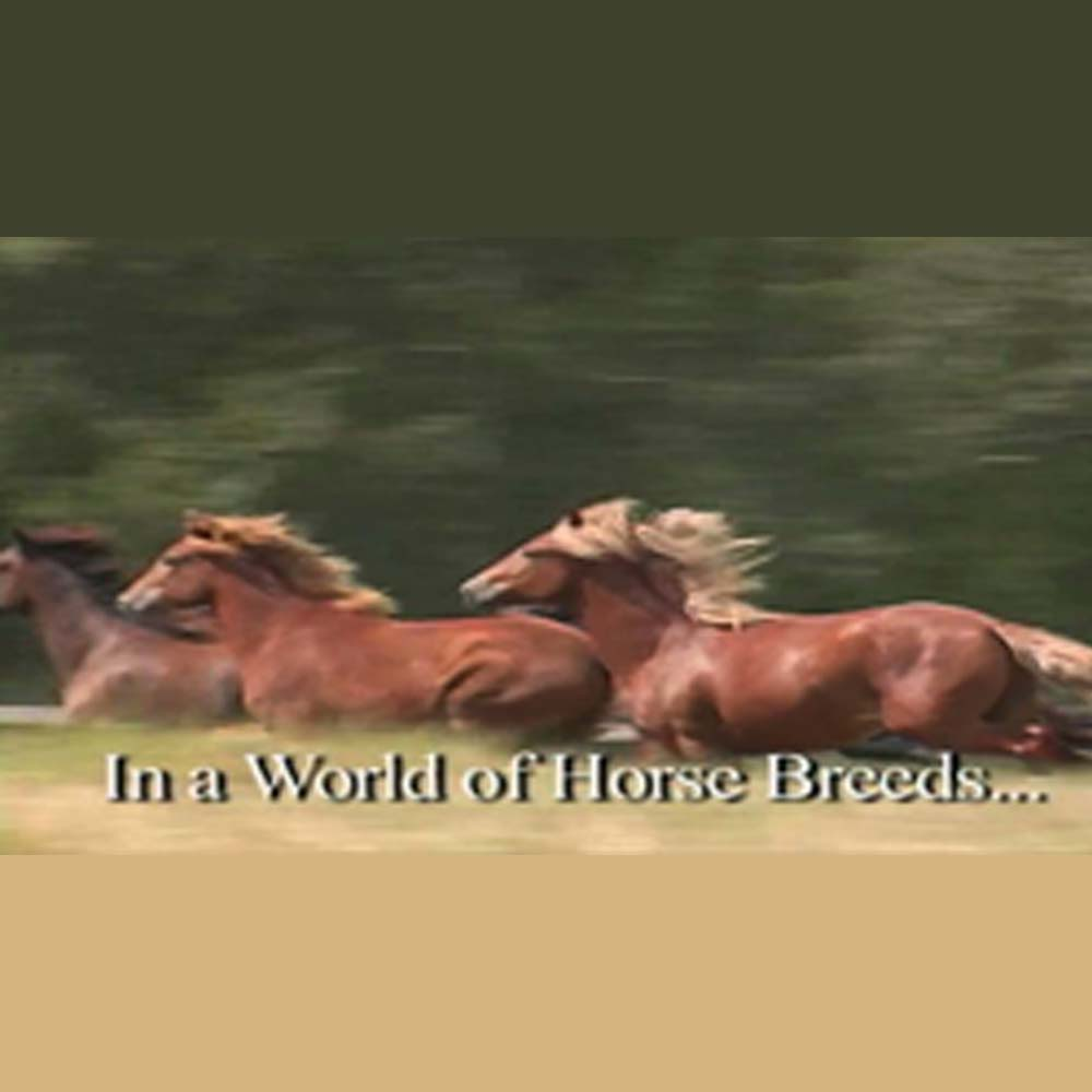 World of Horse Breeds